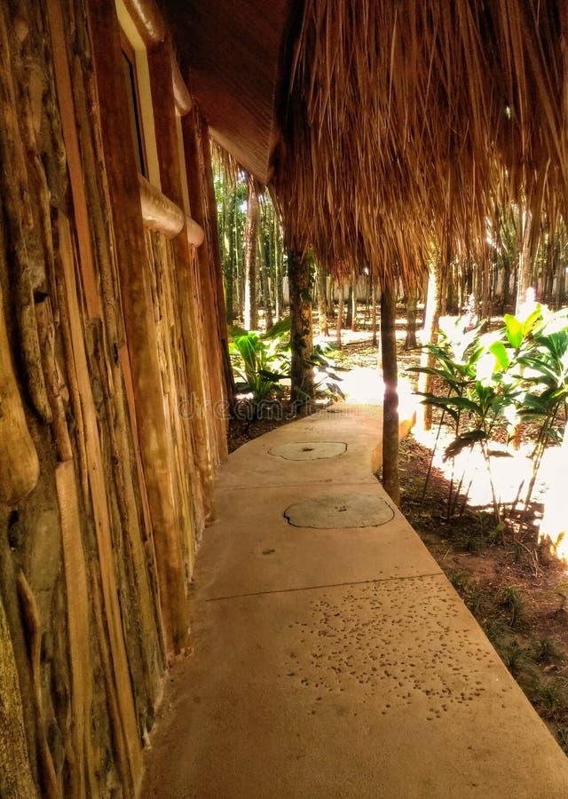 Capanna circondata dalle piante e dalle palme fotografia stock