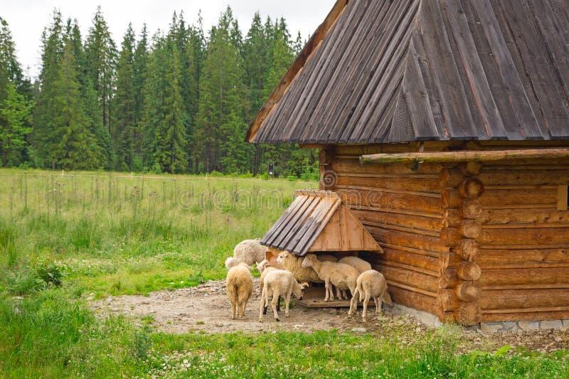 Capanna di legno tradizionale in montagne di Tatra fotografie stock libere da diritti
