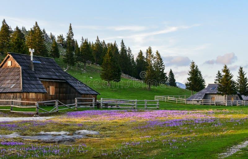 Capanne di legno tipiche su Velika Planina immagine stock libera da diritti