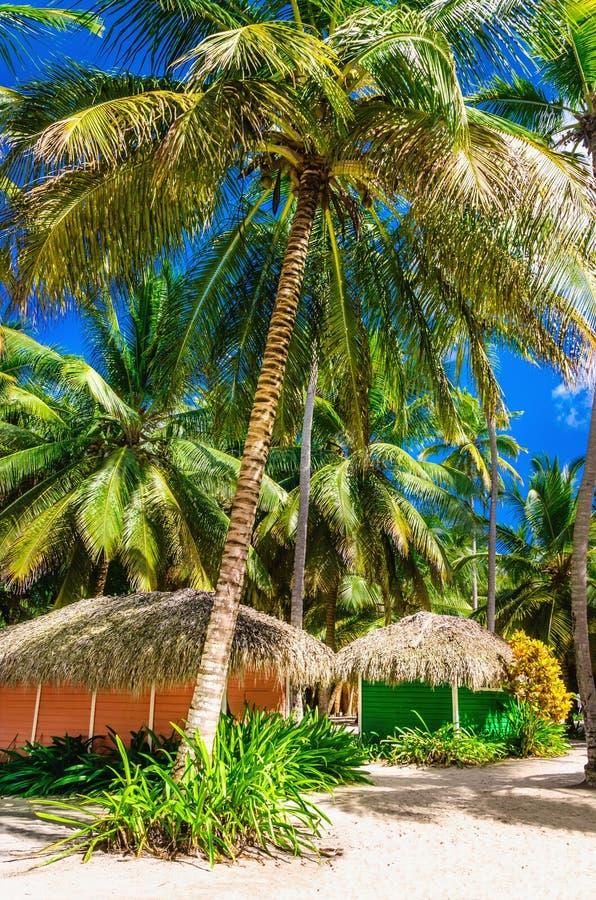Capanne di legno variopinte nascoste fra la Repubblica dominicana alta delle palme fotografia stock libera da diritti
