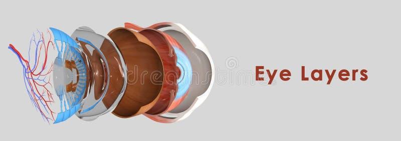 Capas del ojo ilustración del vector