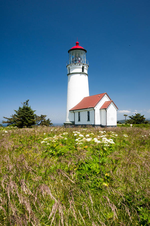 Cape Blanco Lighthouse with native flowers. Native grasses and wildflowers positioned in front of the Cape Blanco lighthouse in Oregon royalty free stock photos