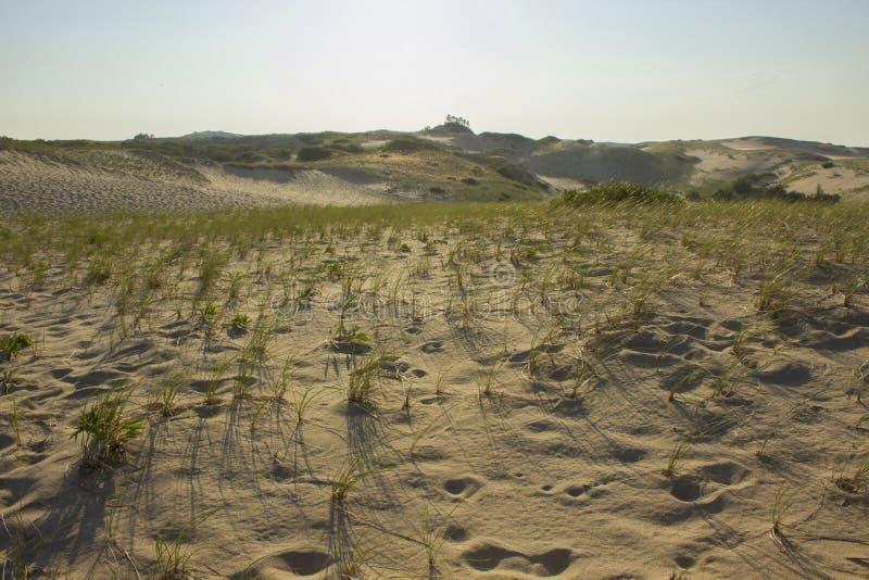 Cape Cod dyn under guld- timme arkivfoton