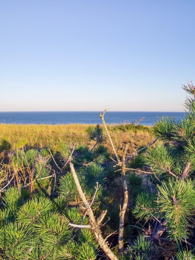 Cape Cod nationella kustklippor på Goldenhour royaltyfri bild