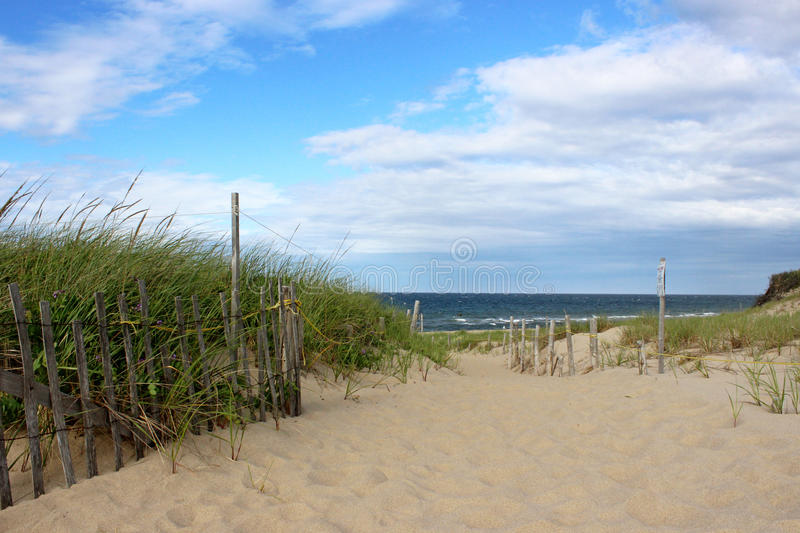 Cape- Codstrand stockfoto