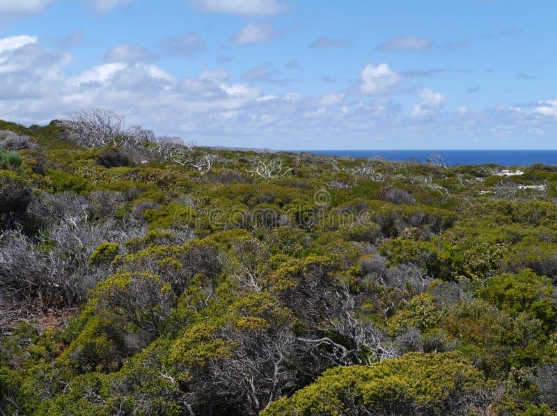Cape du Couedic sur l'île de kangourou image stock