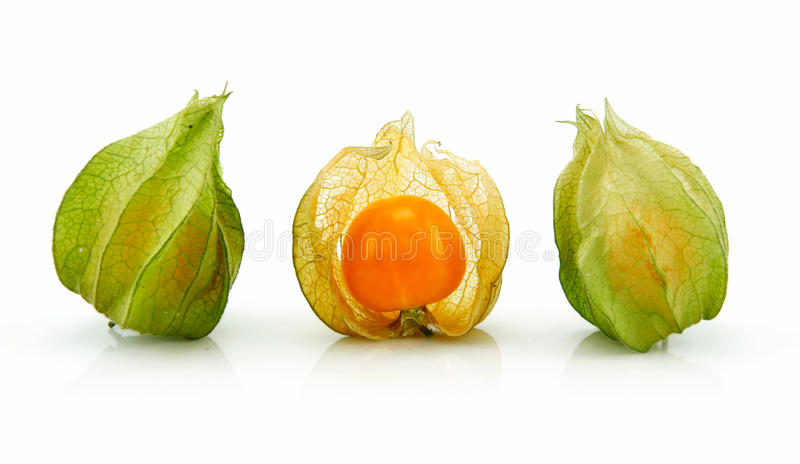 Cape gooseberry (Physalis) isolated on white royalty free stock image