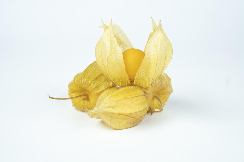 Cape gooseberry. stock photo