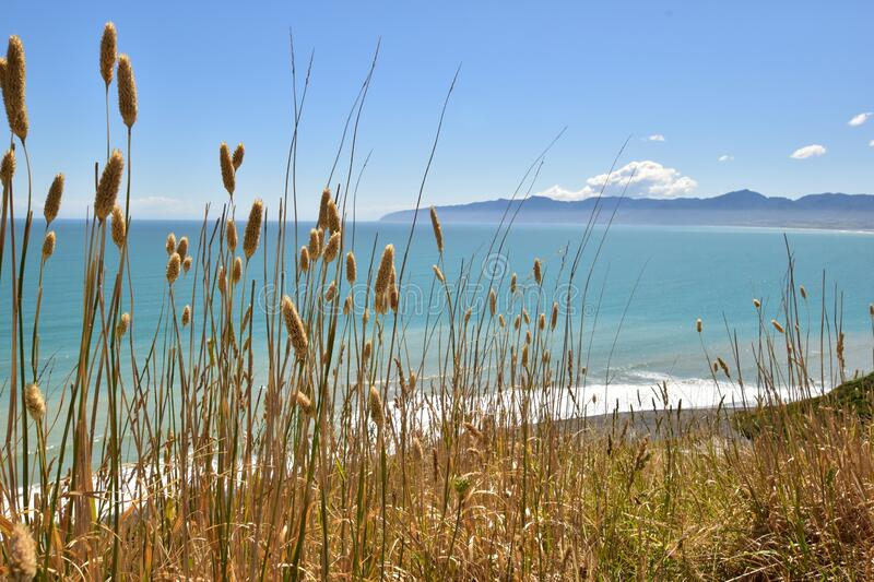 Cape Palliser view landscape with sea, mountains and long grass in the front stock images