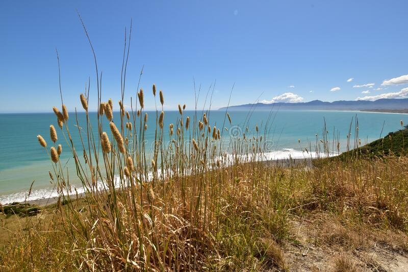 Cape Palliser view landscape with sea, mountains and long grass in the front stock photo