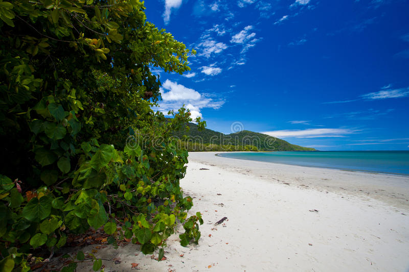Cape Tribulation. Tropical North Queensland, Australia royalty free stock images