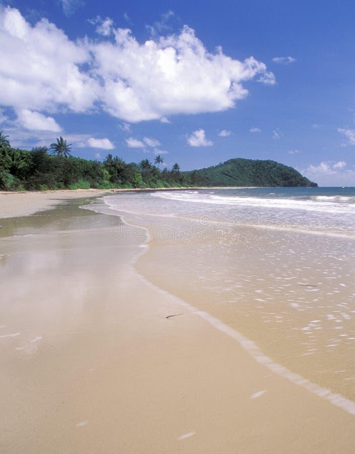Free Cape Tribulation Beach, Queensland Stock Photos - 13280573
