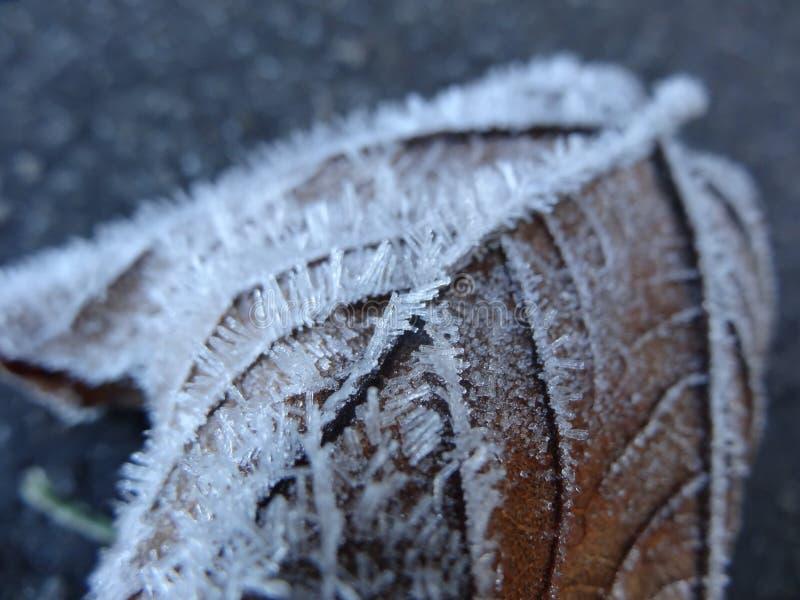 Capelli del ghiacciolo fotografia stock