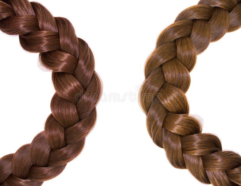 Capelli del ` s delle donne isolati su fondo bianco Una treccia marrone di capelli fotografia stock