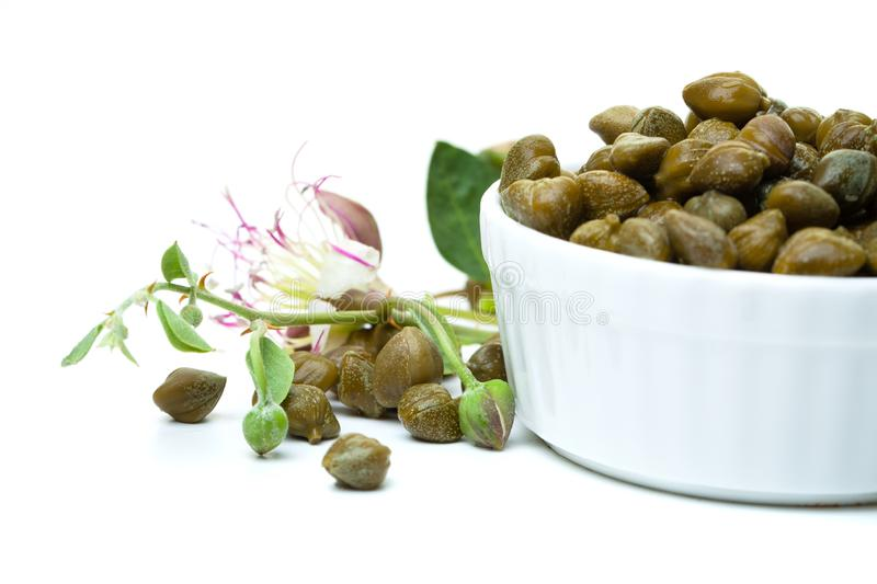 Capers with coper plant in white bowl on white background.  stock photo