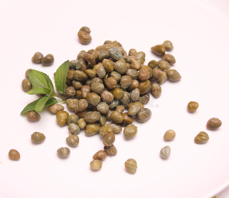 Capers. Some fresh capers on a white background stock photography