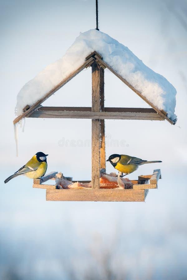 Capezzolo due nell'alimentatore dell'uccello immagine stock libera da diritti