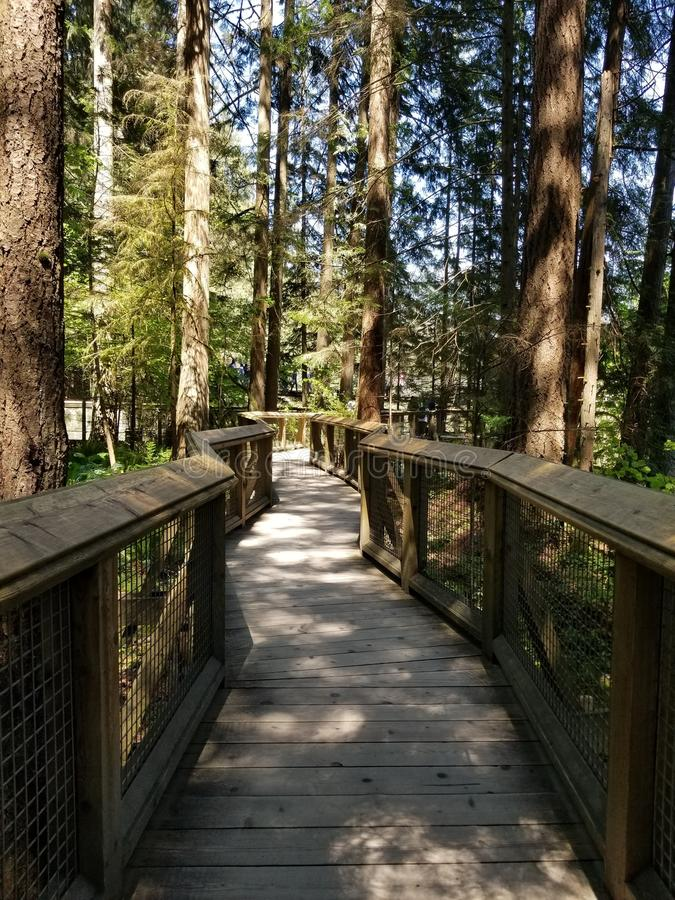 Capilano桥梁的森林 免版税图库摄影