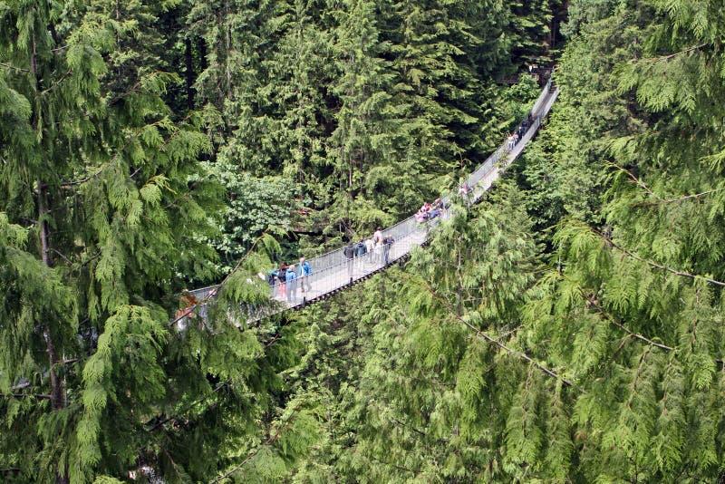 Capilano Aufhebung-Brücke lizenzfreie stockfotos