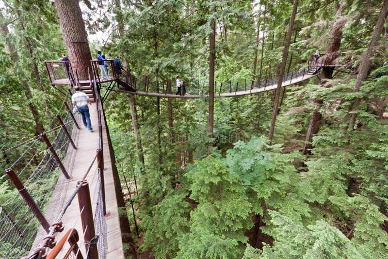 capilano bridżowy park obraz royalty free