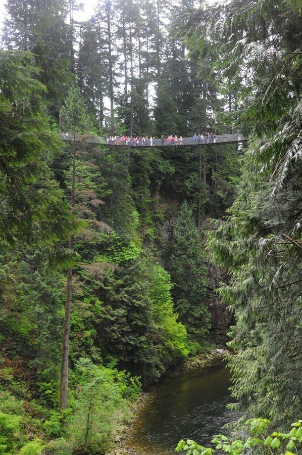 Capilano Suspension Bridge. People walking across Capilano Suspension Bridge in British Columbia Canada royalty free stock photography