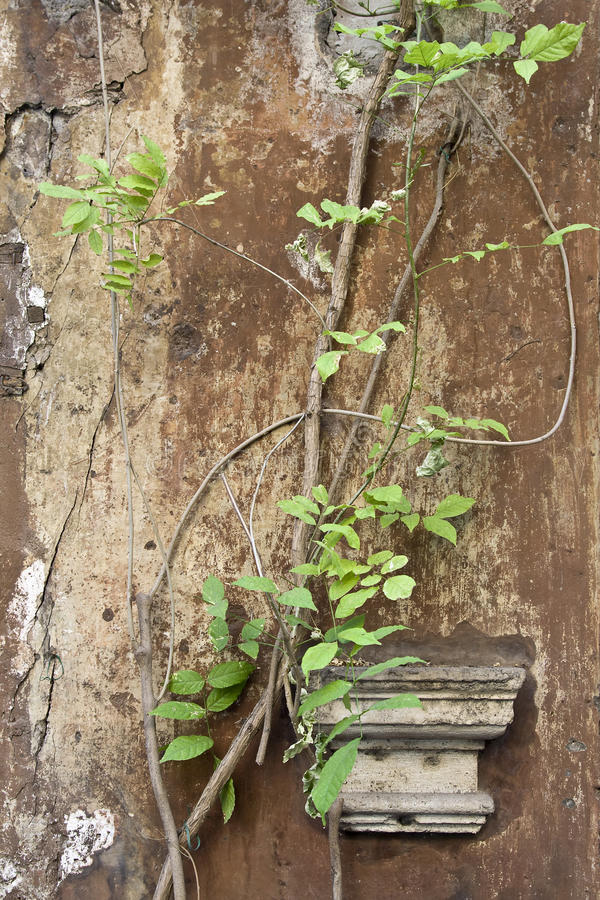 Download Capital and ivy stock image. Image of plant, column, roman - 23747199