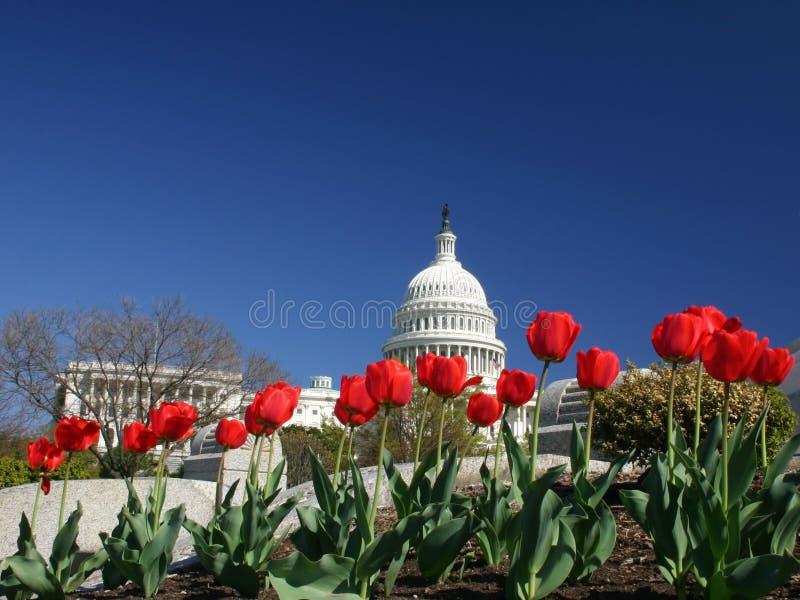 Capitale degli Stati Uniti con i tulipani immagini stock