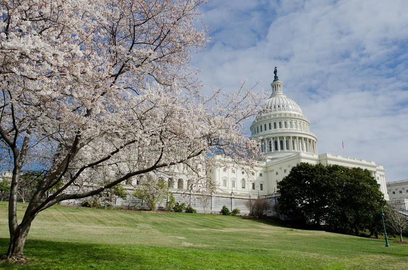 Download Capitol Building In Washington DC USA In Spring Stock Photo - Image: 19589806