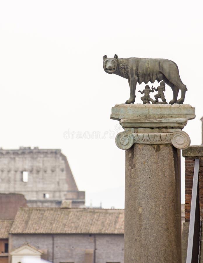 Capitoline ona wilk obrazy stock