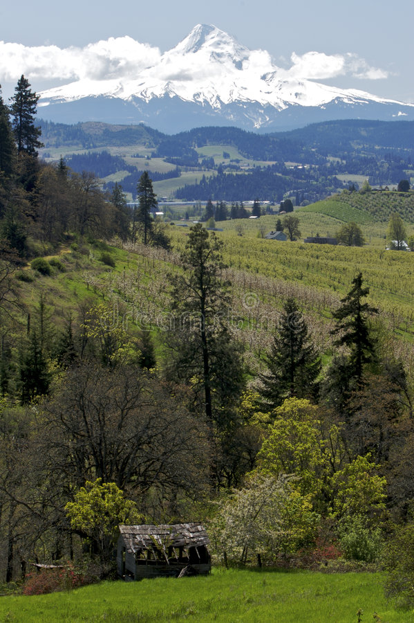 Capo motor del Mt y paisaje de Oregon foto de archivo libre de regalías