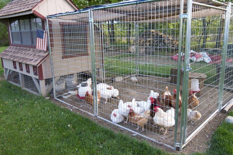 Capoeira de galinha imagens de stock
