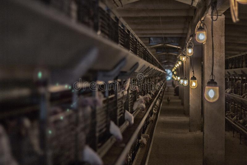Capoeira de galinha moderna em que as galinhas de grelha são produzidas para o consumo no alimento, exploração avícola, por do so fotografia de stock royalty free