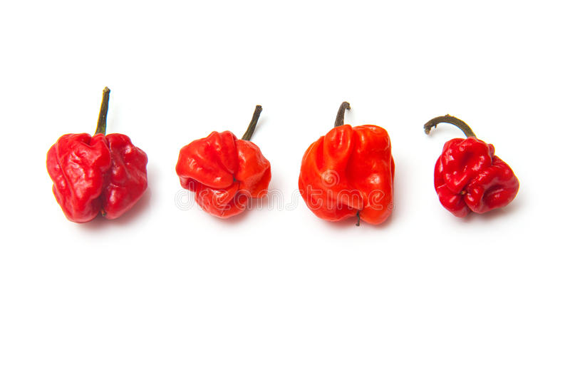 Capot écossais Chili Peppers, d'isolement photographie stock