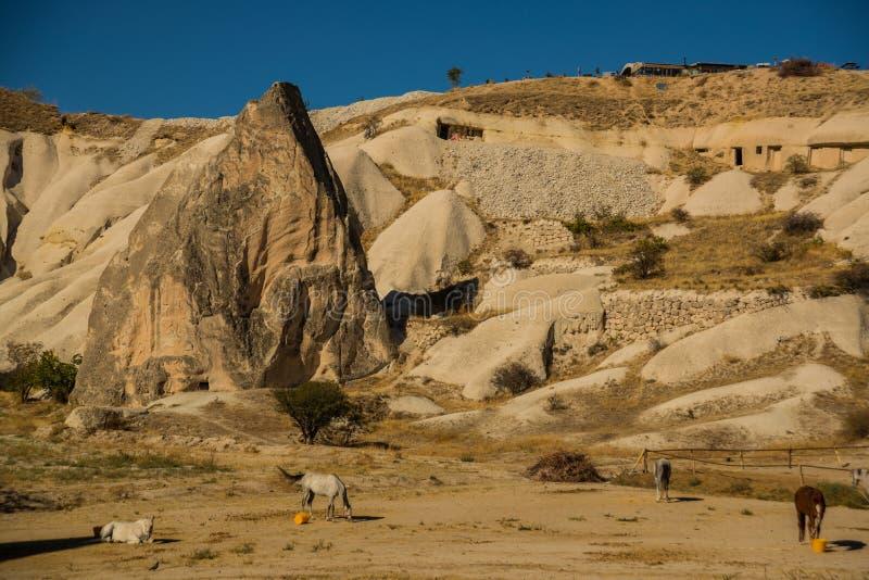 Cappadocia, Turcja: Konie blisko gór w Pogodnym lecie wietrzeją Piękny krajobraz w lecie z wzgórzami obrazy royalty free