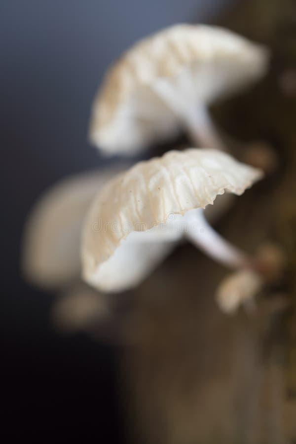 capped mushroom 库存照片