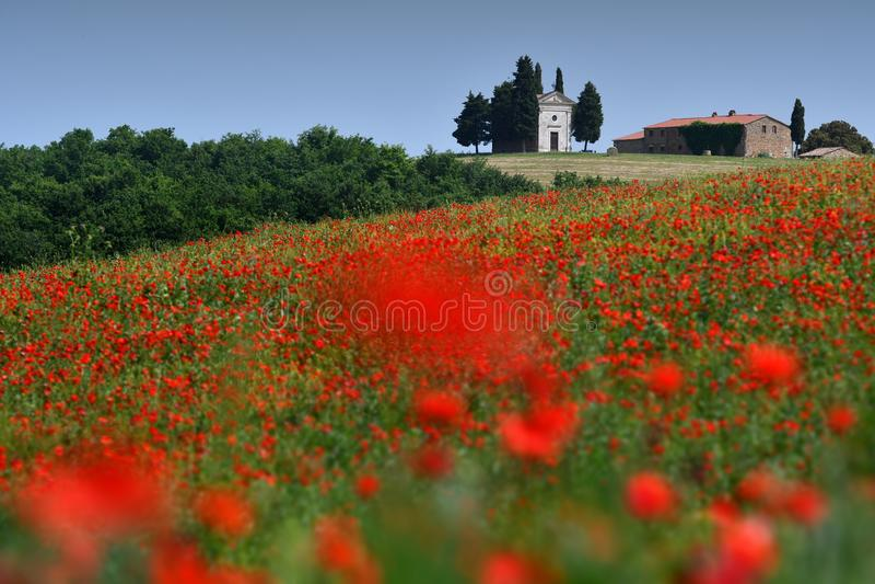 Cappella Di Vitaleta oder Vitaleta-Kapelle nahe Pienza in Toskana Schönes Feld von roten Mohnblumen und die berühmte Kapelle auf  lizenzfreie stockfotografie