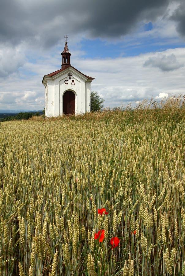 Download Cappella e grano immagine stock. Immagine di agricoltura - 56875249