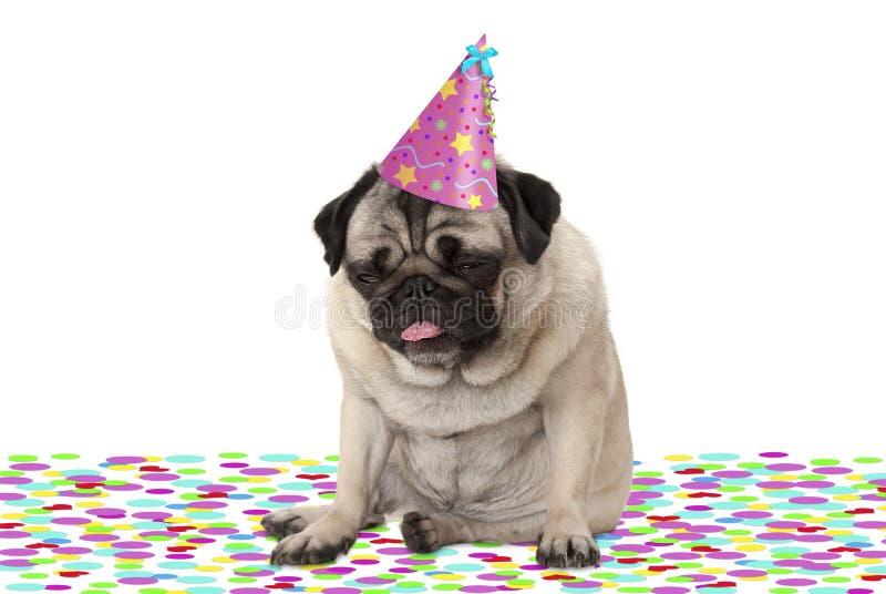 Cappello d'uso del partito del cucciolo di cane divertente del carlino, sedentesi sui coriandoli, potabili su champagne, stanco c immagini stock