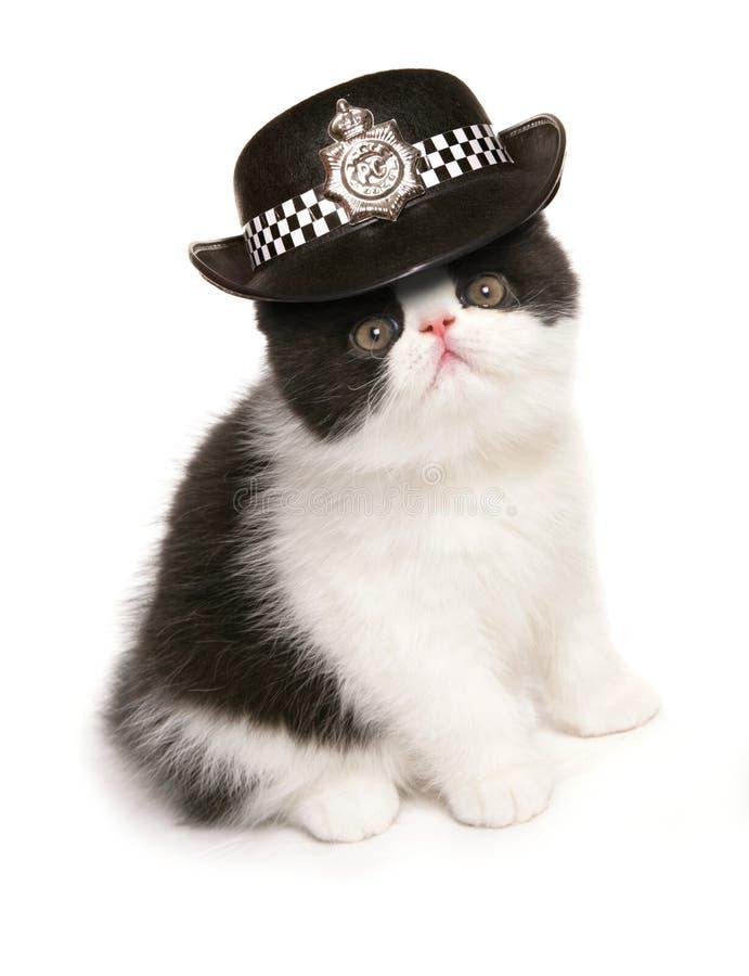 Cappello della polizia delle donne d'uso del gattino immagini stock libere da diritti