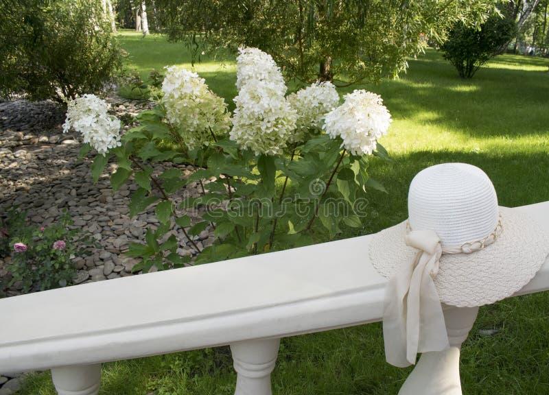 Cappello di eleganza con il nastro sul parapetto e sul fiore bianco di Hortensia dell'ortensia al parco fondo romantico immagini stock libere da diritti
