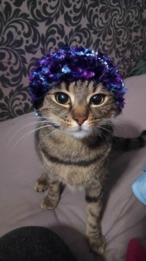 Cappello di Kittys fotografia stock