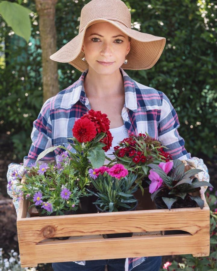 Cappello di paglia d'uso del bello giardiniere femminile che giudica cassa di legno piena dei fiori pronti ad essere piantato nel fotografia stock