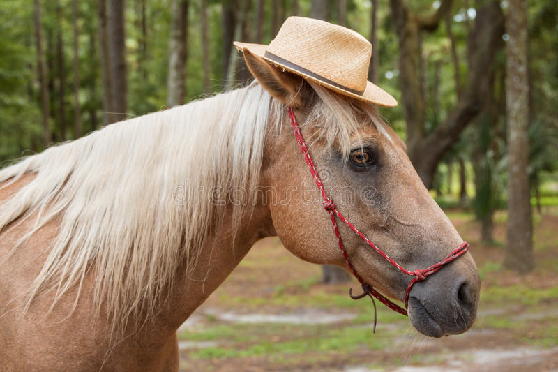 Cappello di paglia d'uso del cavallo del palomino immagine stock