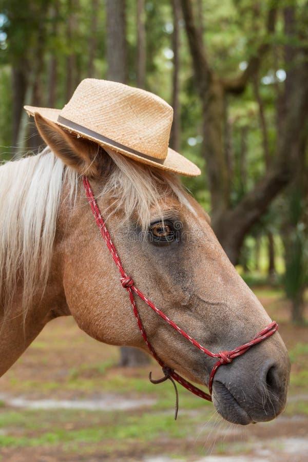 Cappello di paglia d'uso del cavallo del palomino fotografia stock libera da diritti