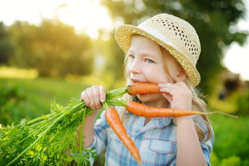 Cappello di paglia d'uso della bambina sveglia che tiene un mazzo di carote organiche fresche Alimento biologico sano fresco per  immagine stock