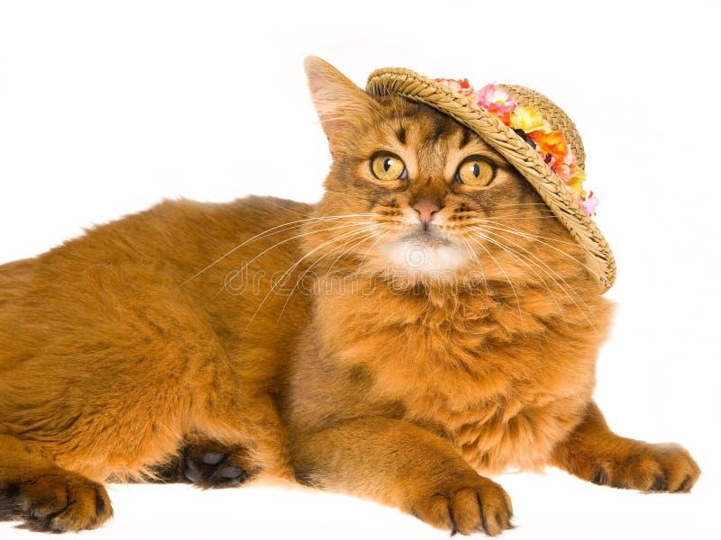 Cappello di paglia floreale da portare somalo sveglio fotografia stock libera da diritti