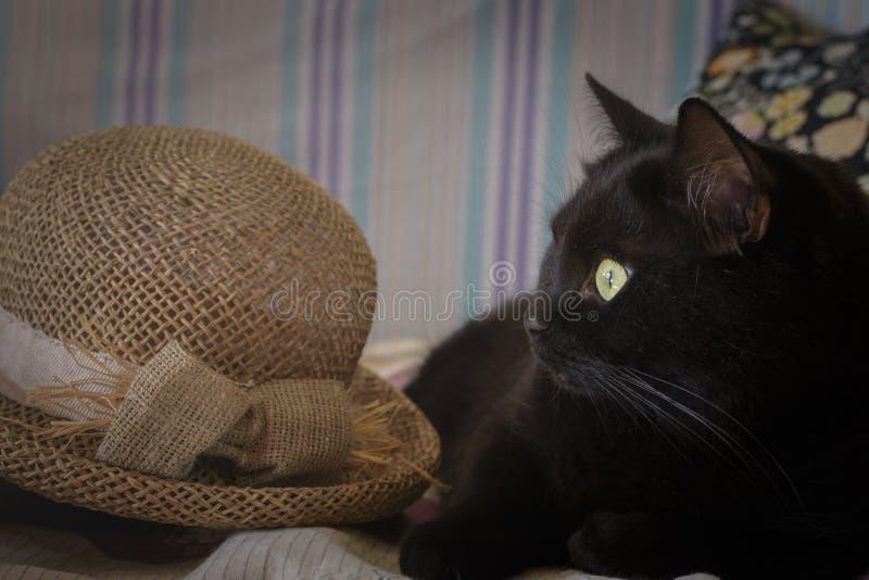 Cappello nero di paglia e del gattino fotografie stock libere da diritti