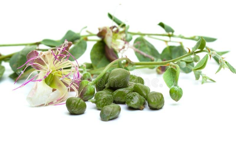 Capperi con le foglie verdi ed il fiore fotografia stock