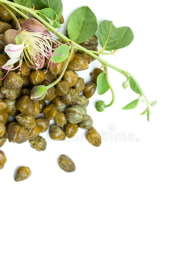 Capperi, pianta del cappero e fiore marinati su fondo bianco immagini stock libere da diritti