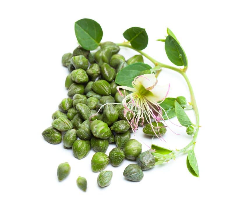 Capperi su fondo bianco Germoglio del cappero, foglie verdi immagine stock libera da diritti